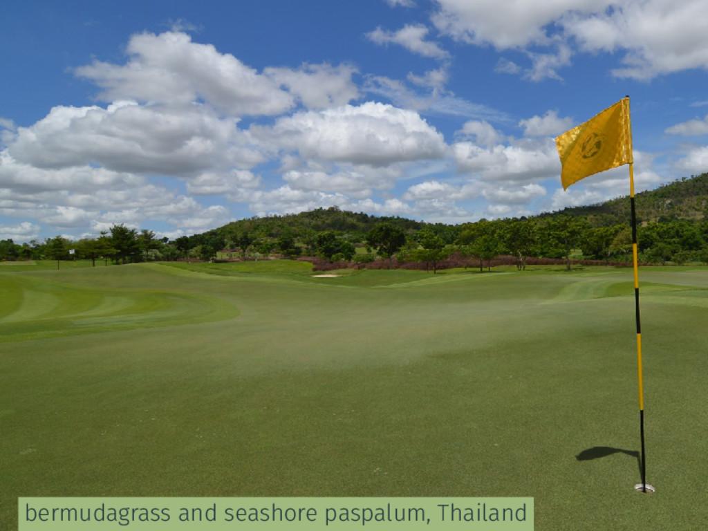 bermudagrass and seashore paspalum, Thailand
