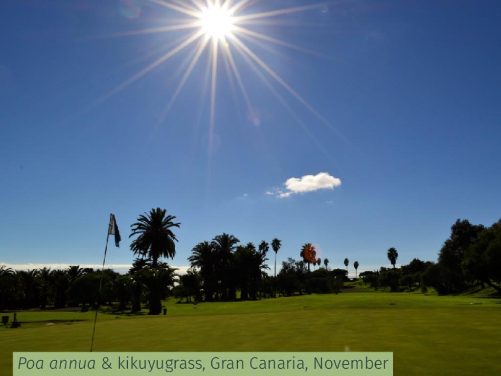 Poa annua & kikuyugrass, Gran Canaria, November