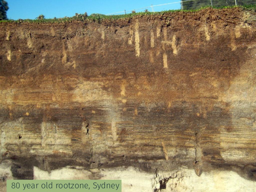 80 year old rootzone, Sydney
