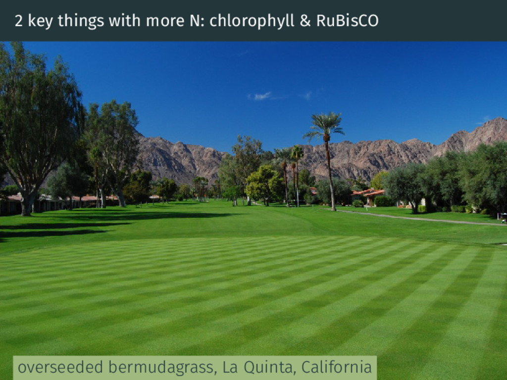 2 key things with more N: chlorophyll & RuBisCO...