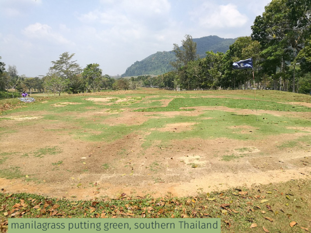 manilagrass putting green, southern Thailand