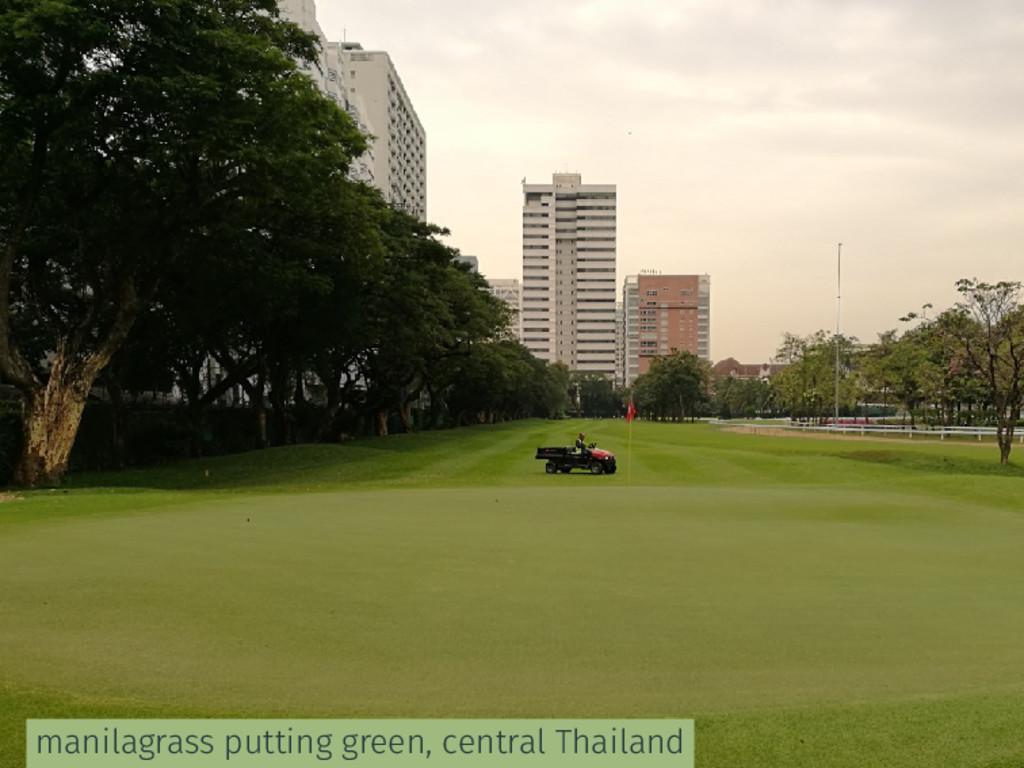 manilagrass putting green, central Thailand
