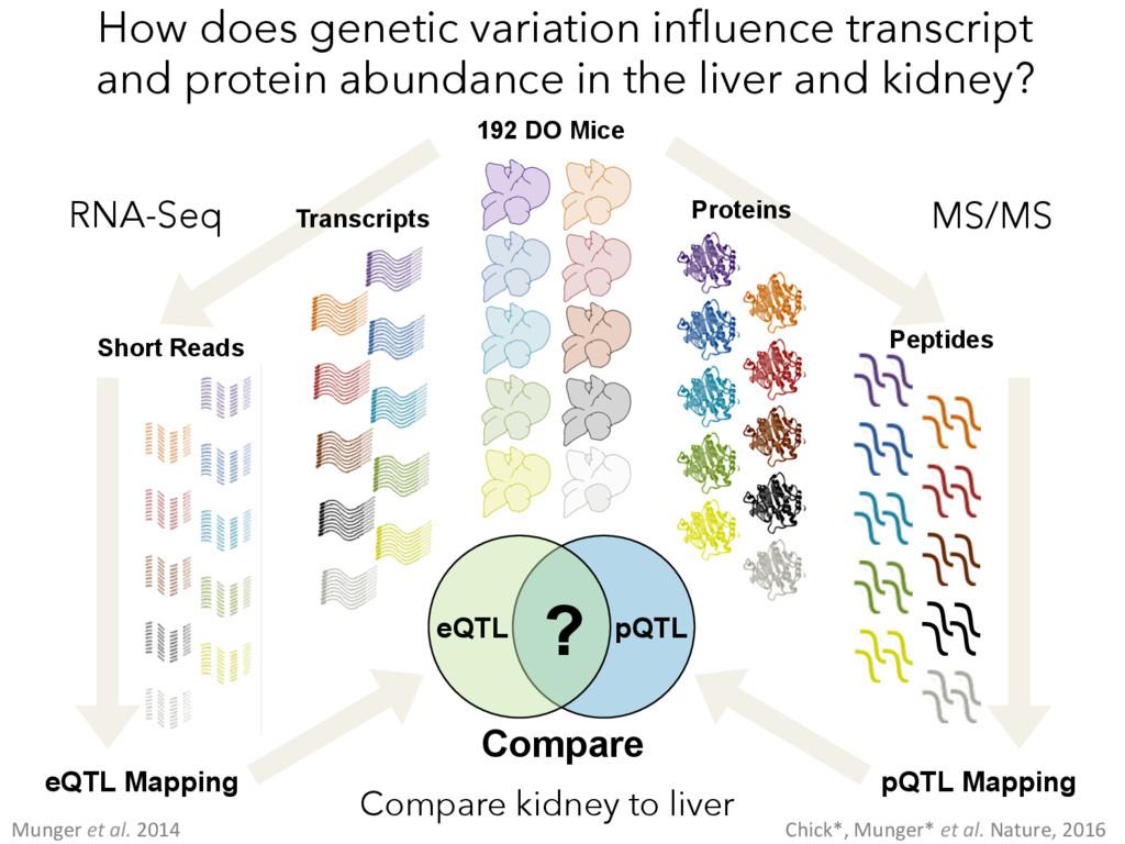 192 DO Mice Transcripts Short Reads RNA-Seq eQT...