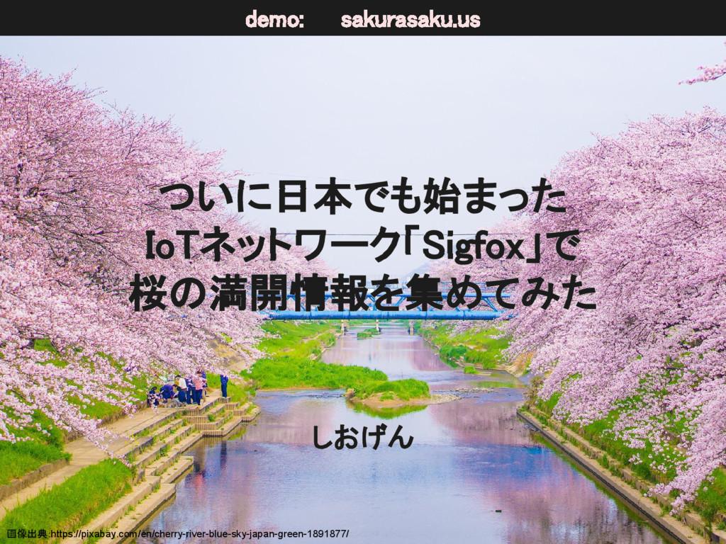 ついに日本でも始まった IoTネットワーク「Sigfox」で 桜の満開情報を集めてみた しおげ...