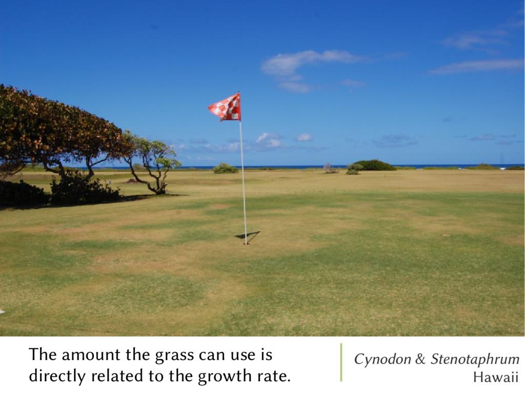 Cynodon & Stenotaphrum Hawaii The amount the gr...