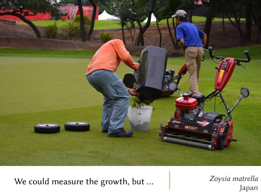 Zoysia matrella Japan We could measure the grow...