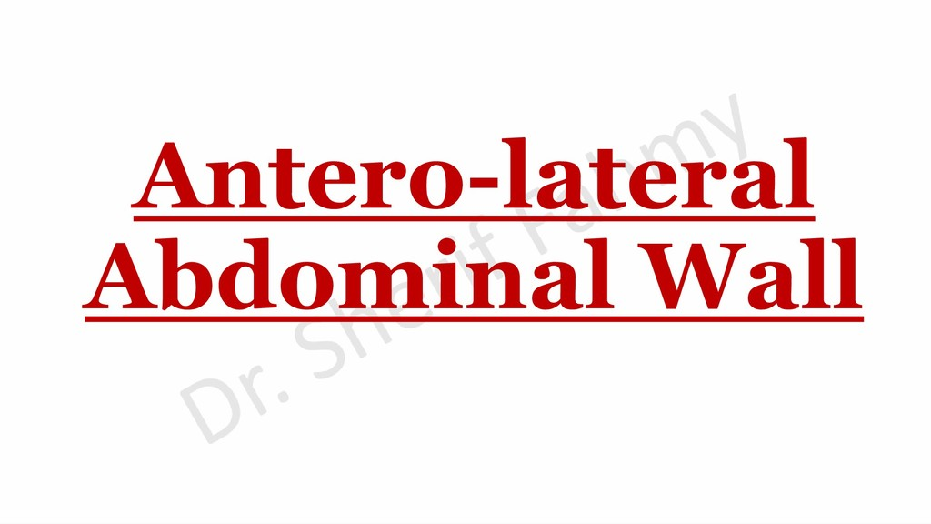 Antero-lateral Abdominal Wall