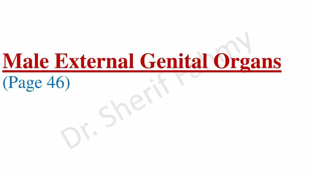 Male External Genital Organs (Page 46)