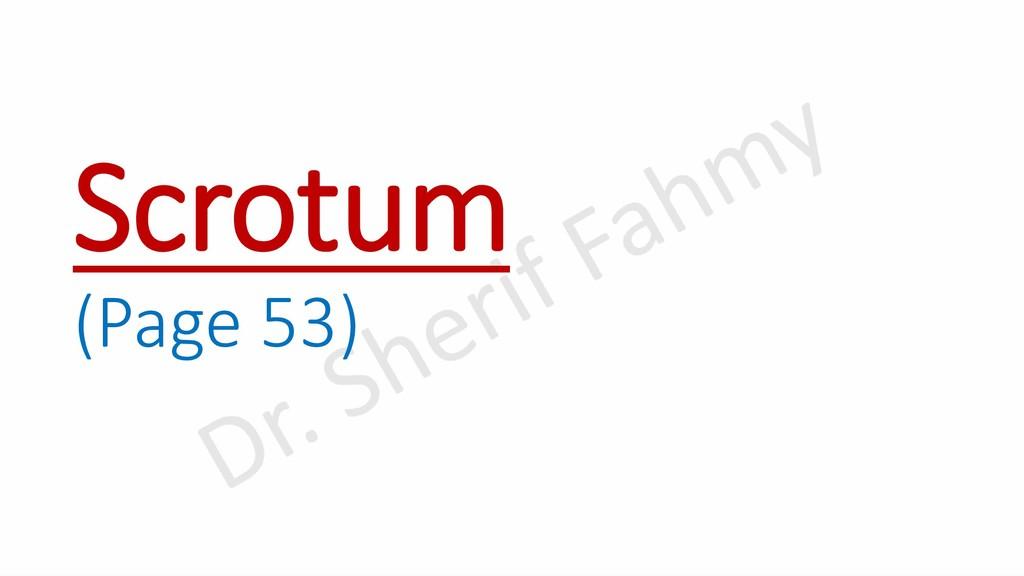 Scrotum (Page 53)