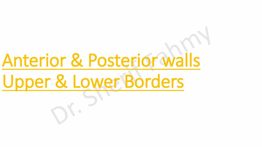 Anterior & Posterior walls Upper & Lower Borders
