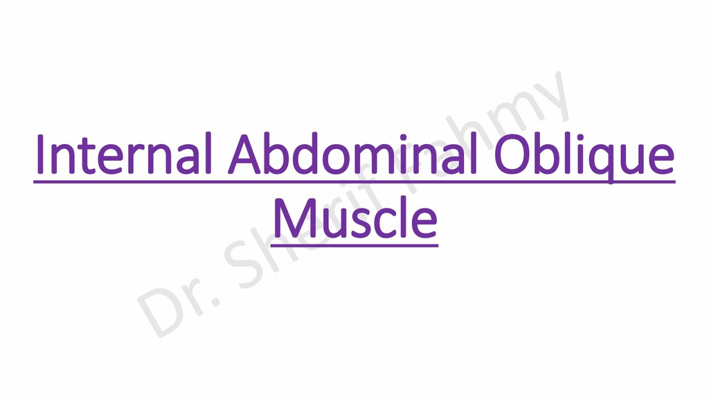 Internal Abdominal Oblique Muscle