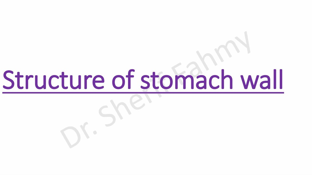 Structure of stomach wall