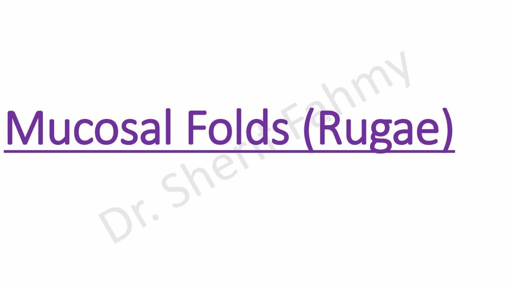 Mucosal Folds (Rugae)
