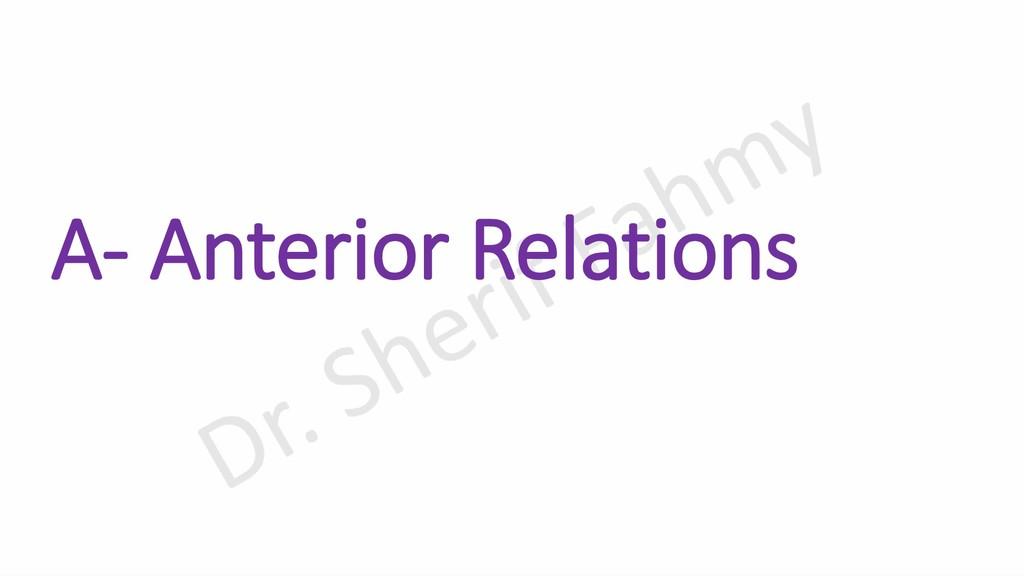 A- Anterior Relations
