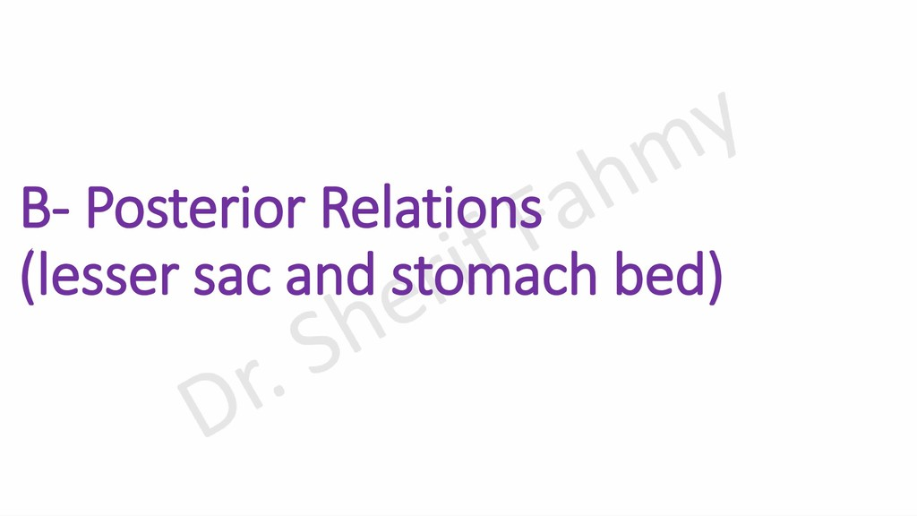 B- Posterior Relations (lesser sac and stomach ...