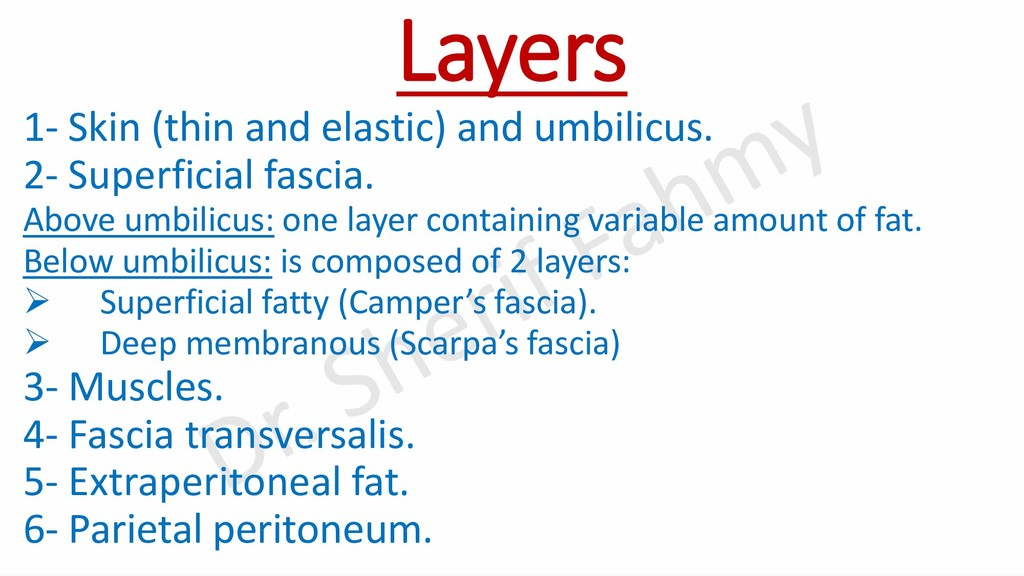 Layers 1- Skin (thin and elastic) and umbilicus...
