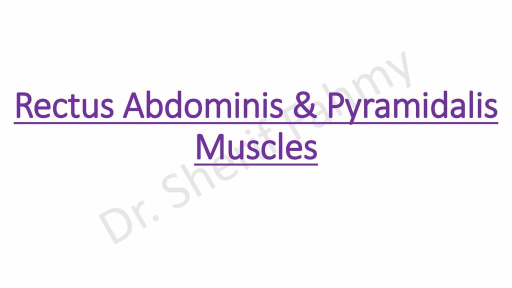 Rectus Abdominis & Pyramidalis Muscles