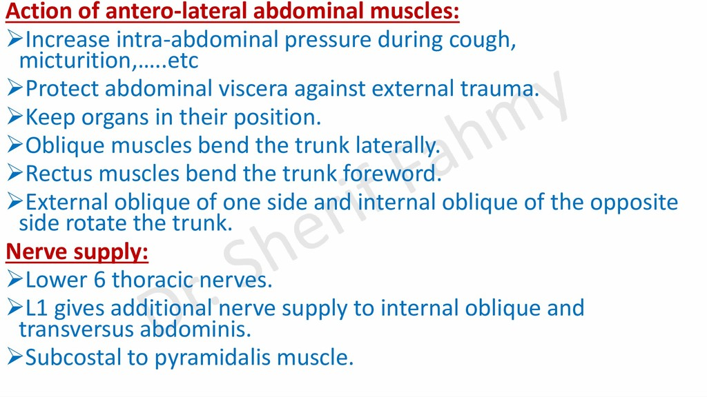 Action of antero-lateral abdominal muscles: ➢In...