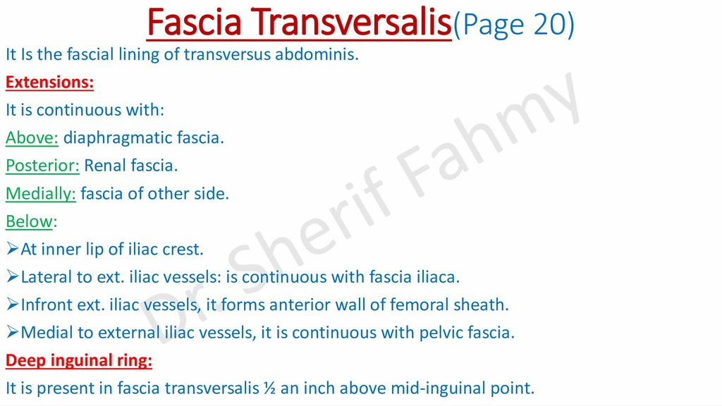 Fascia Transversalis(Page 20) It Is the fascial...