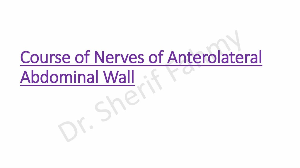 Course of Nerves of Anterolateral Abdominal Wall