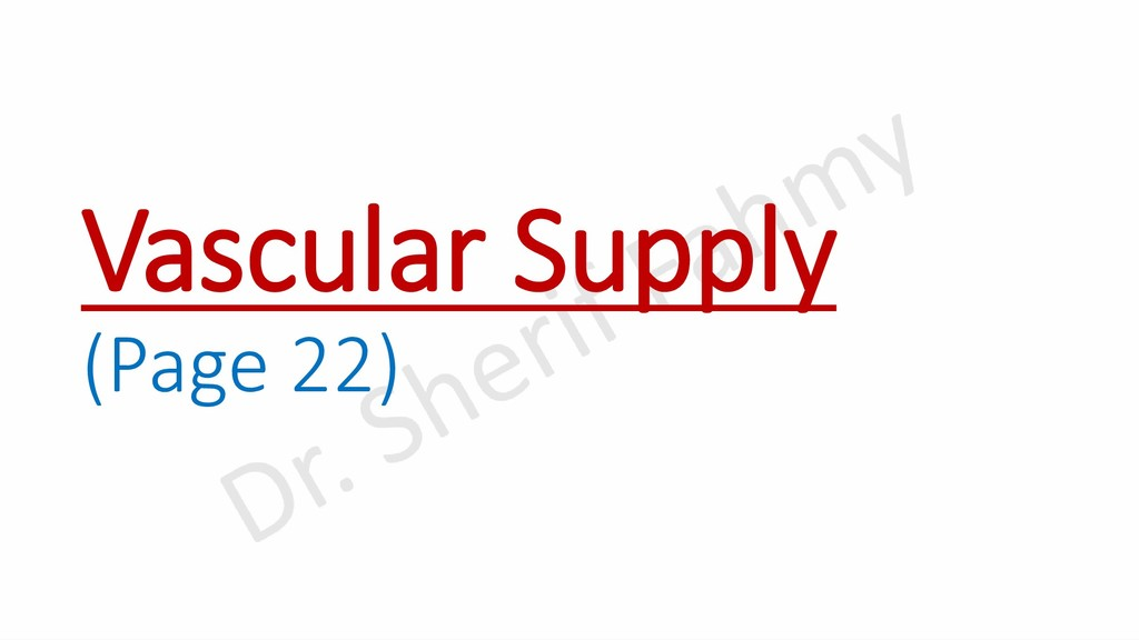 Vascular Supply (Page 22)