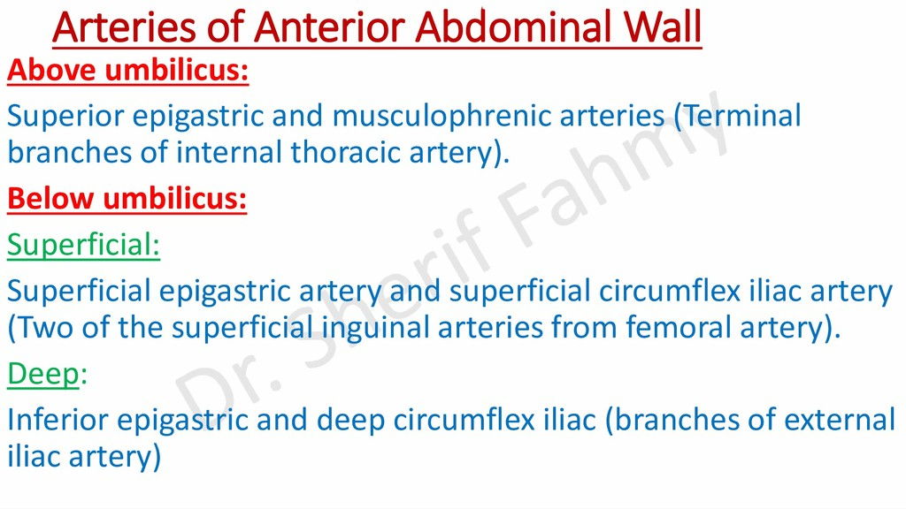 Arteries of Anterior Abdominal Wall Above umbil...
