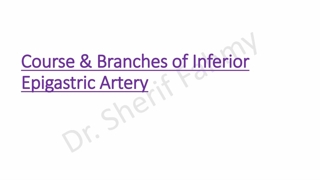 Course & Branches of Inferior Epigastric Artery