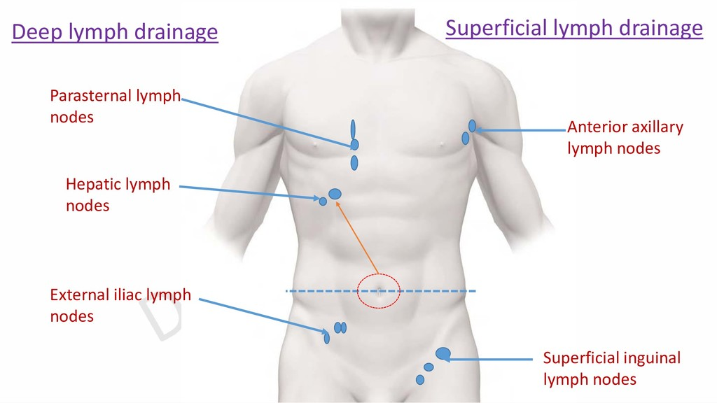 Superficial lymph drainage Deep lymph drainage ...