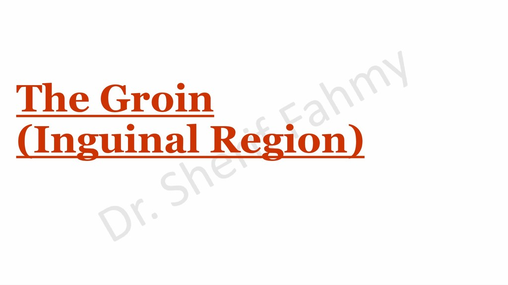 The Groin (Inguinal Region)