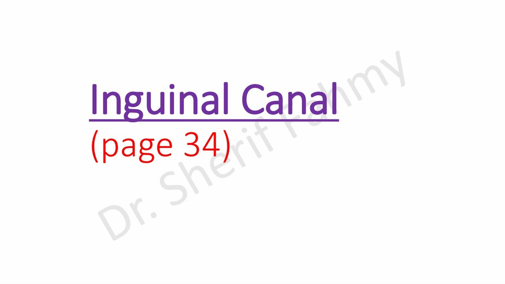 Inguinal Canal (page 34)