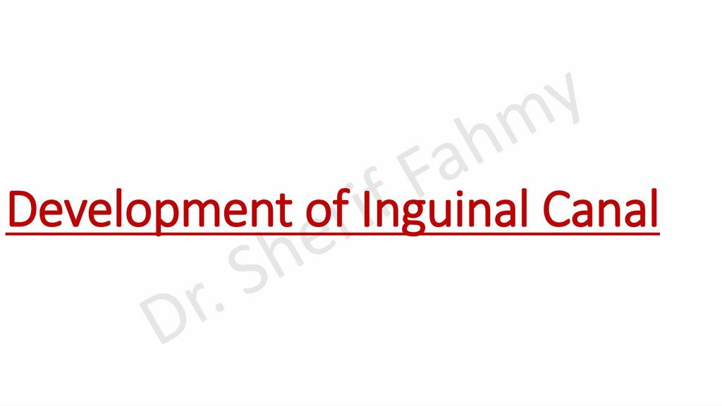 Development of Inguinal Canal