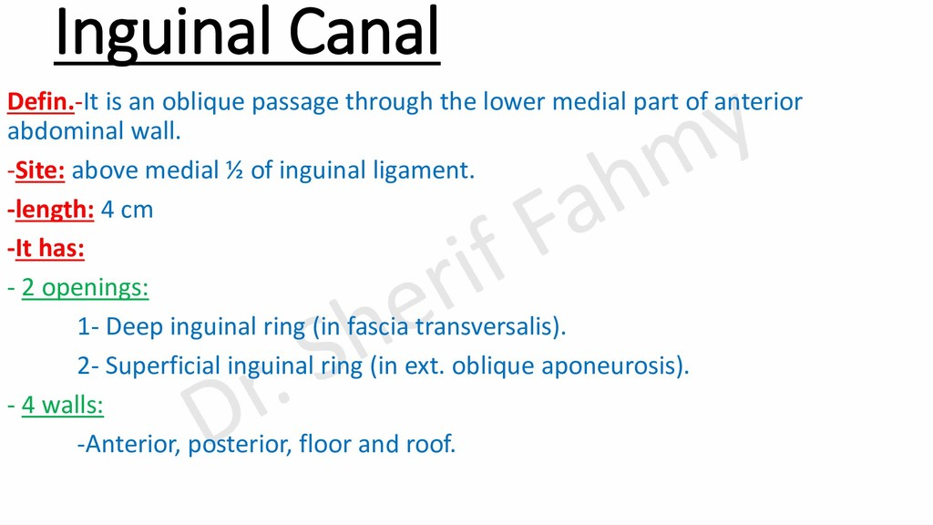 Inguinal Canal Defin.-It is an oblique passage ...