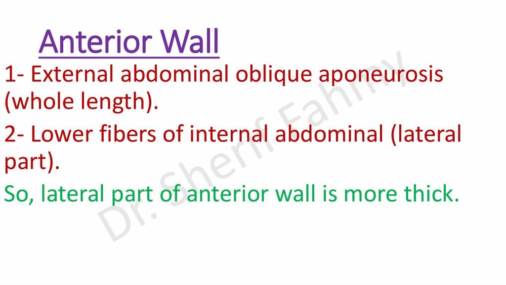 Anterior Wall 1- External abdominal oblique apo...
