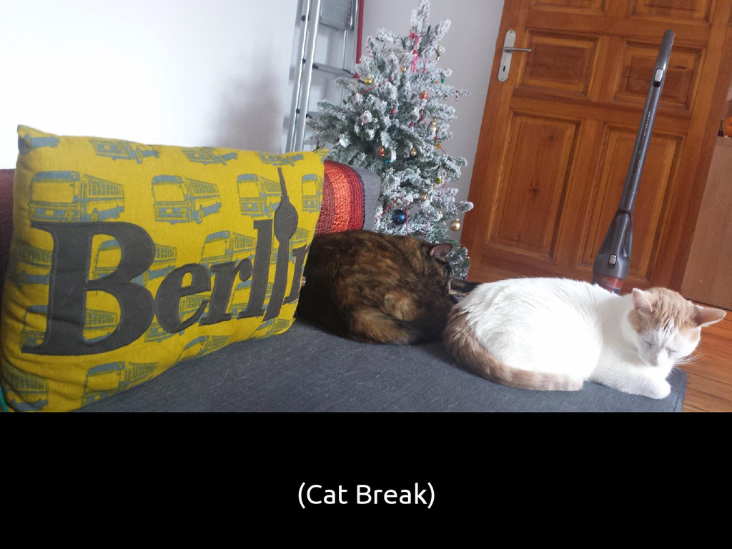 (Cat Break)