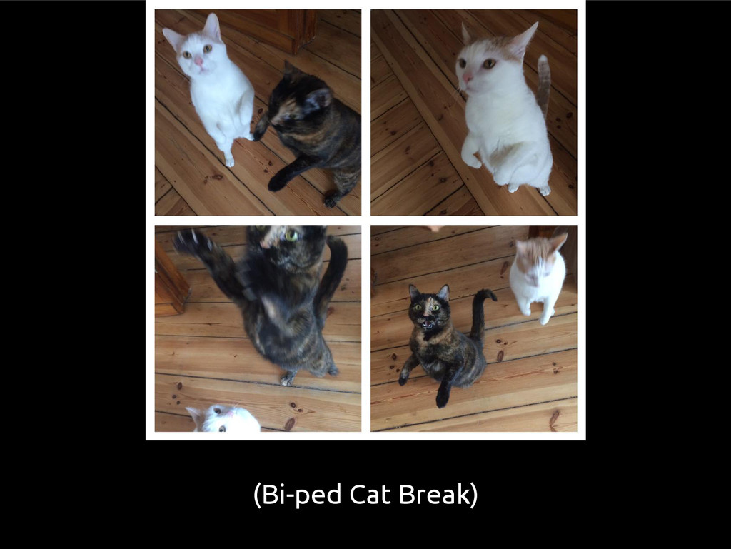(Bi-ped Cat Break)