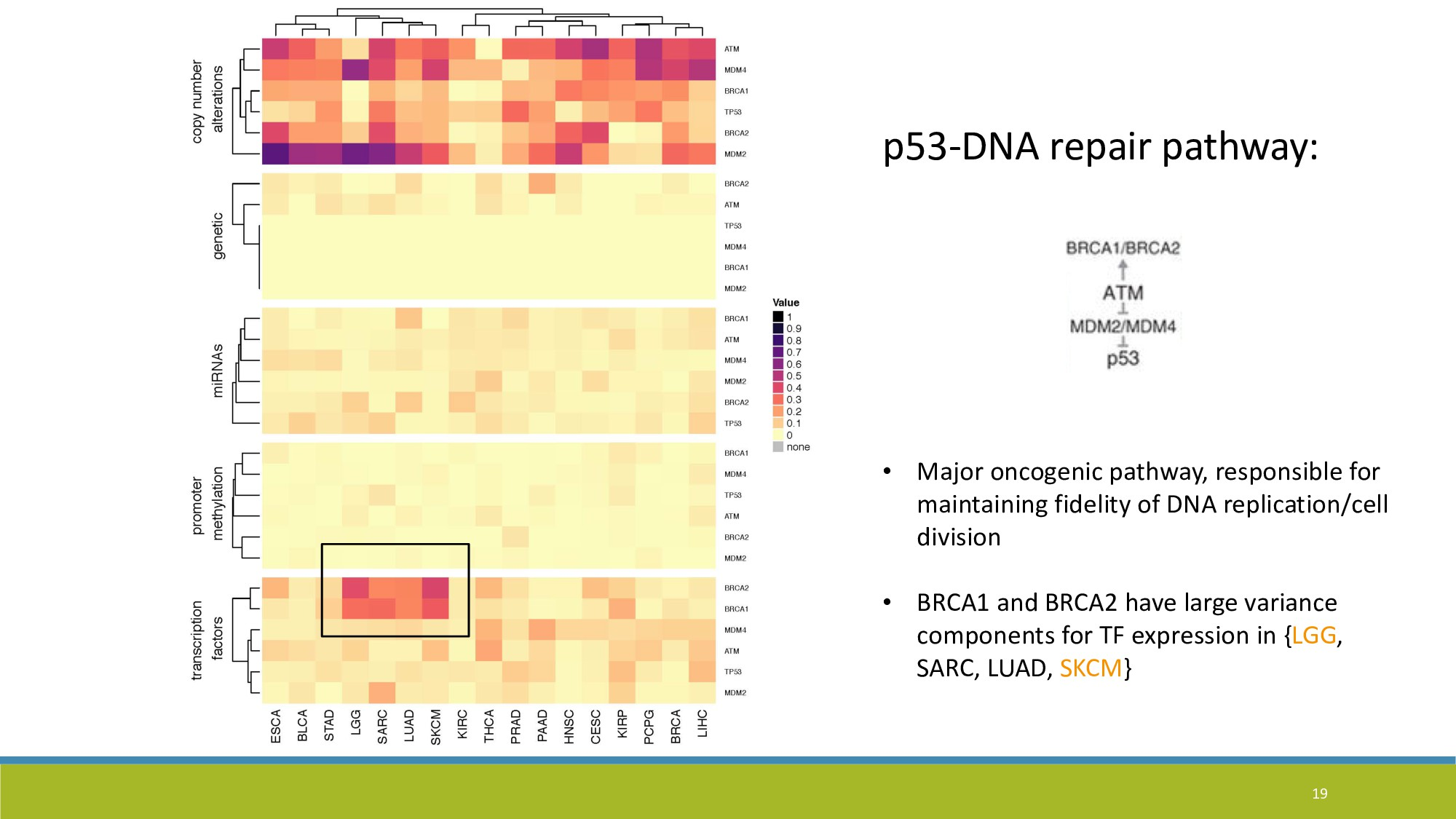 19 p53-DNA repair pathway: • Major oncogenic pa...