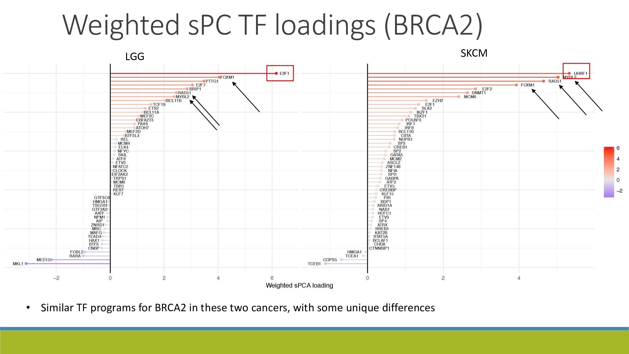 20 LGG SKCM Weighted sPC TF loadings (BRCA2) • ...