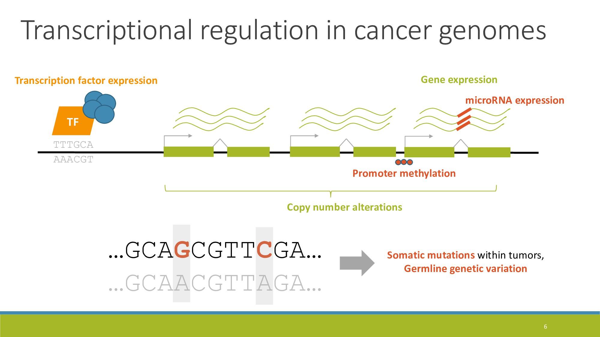 6 Gene expression TTTGCA AAACGT TF Transcriptio...