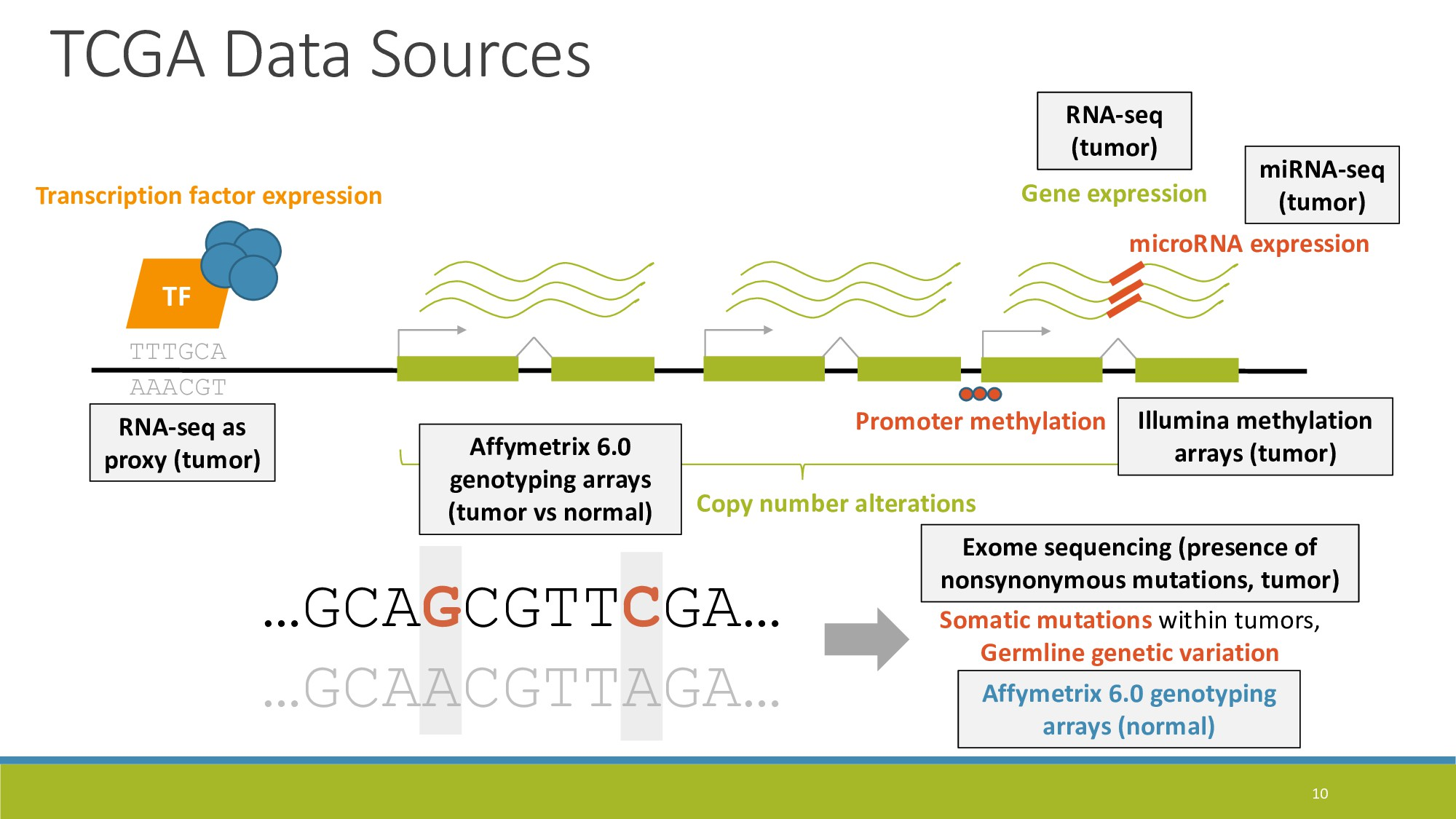 10 Gene expression TTTGCA AAACGT TF Transcripti...