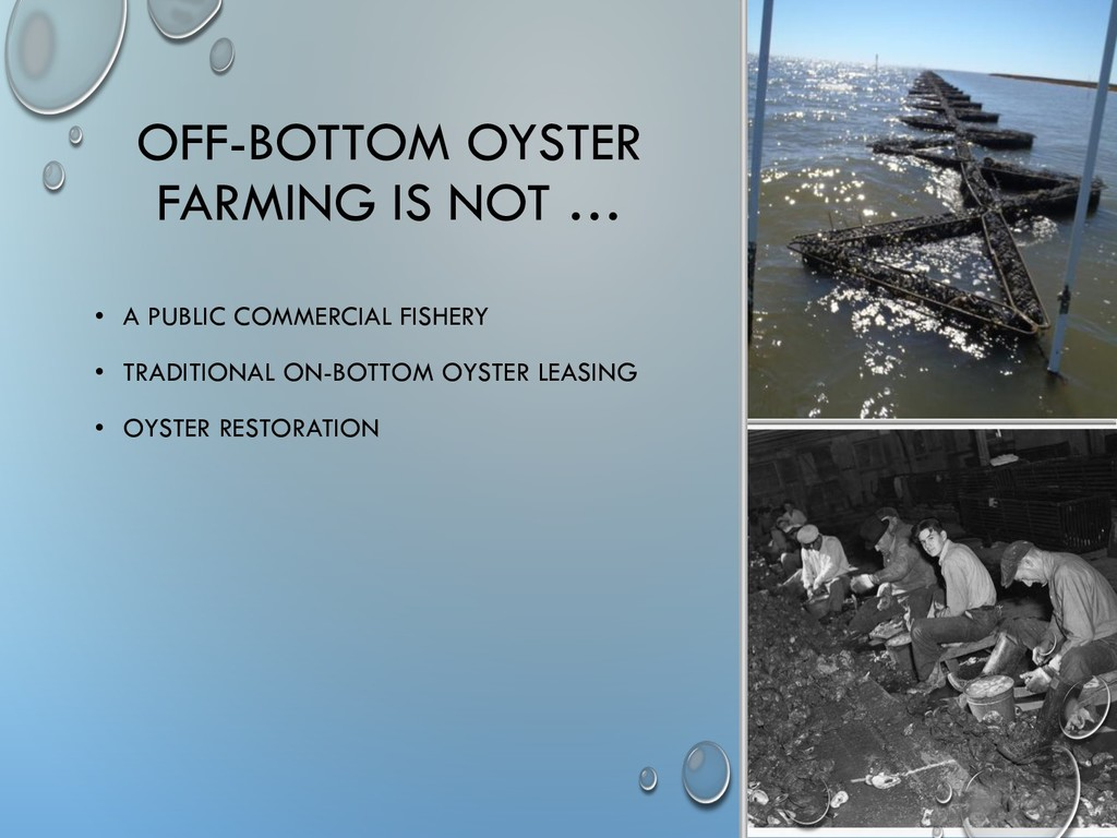 OFF-BOTTOM OYSTER FARMING IS NOT … • A PUBLIC C...