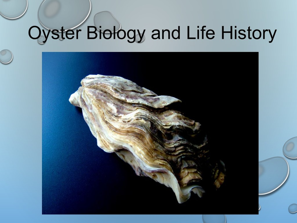 Oyster Biology and Life History