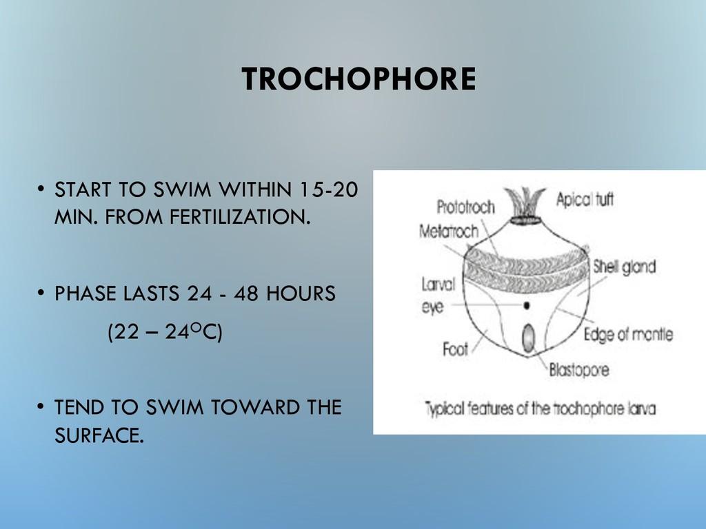 TROCHOPHORE • START TO SWIM WITHIN 15-20 MIN. F...