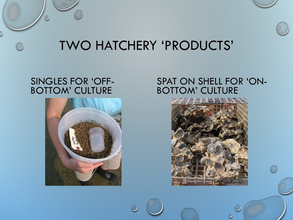 TWO HATCHERY 'PRODUCTS' SINGLES FOR 'OFF- BOTTO...