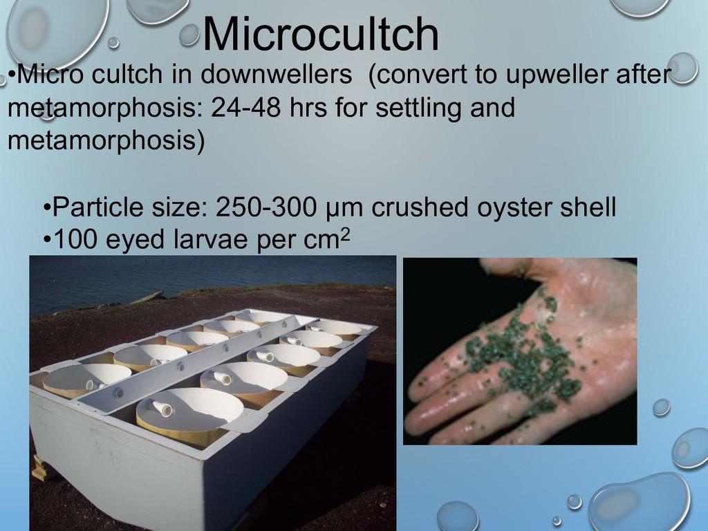 Microcultch •Micro cultch in downwellers (conve...