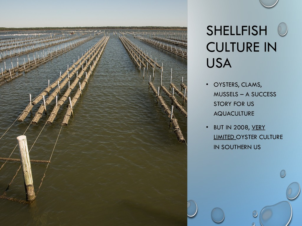 SHELLFISH CULTURE IN USA • OYSTERS, CLAMS, MUSS...