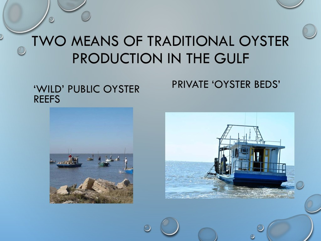 TWO MEANS OF TRADITIONAL OYSTER PRODUCTION IN T...