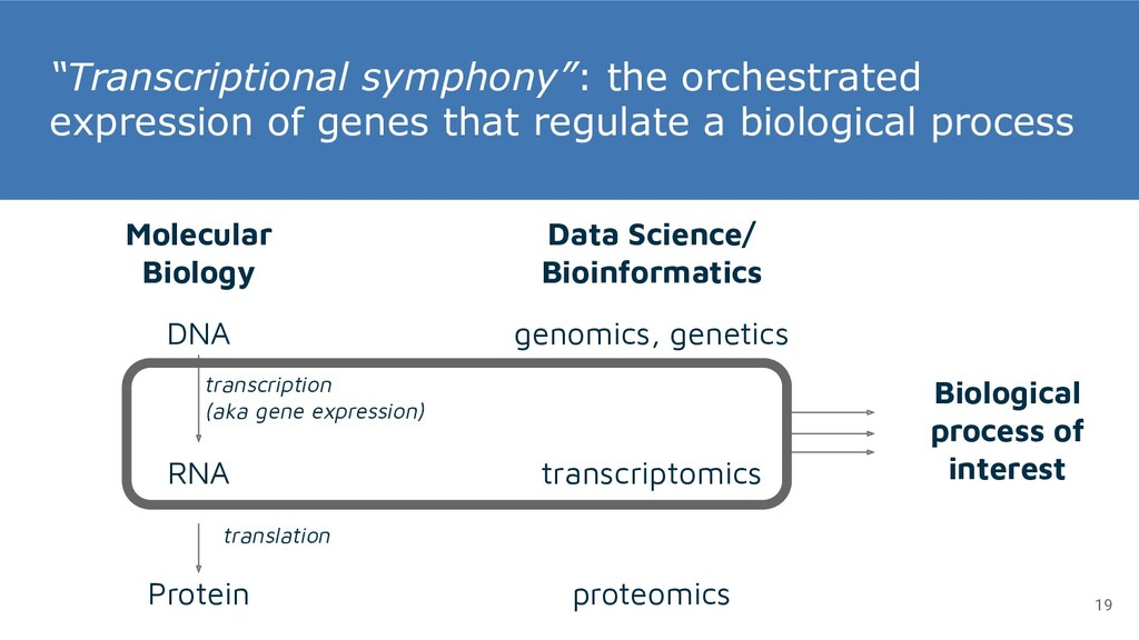 """Transcriptional symphony"": the orchestrated ex..."