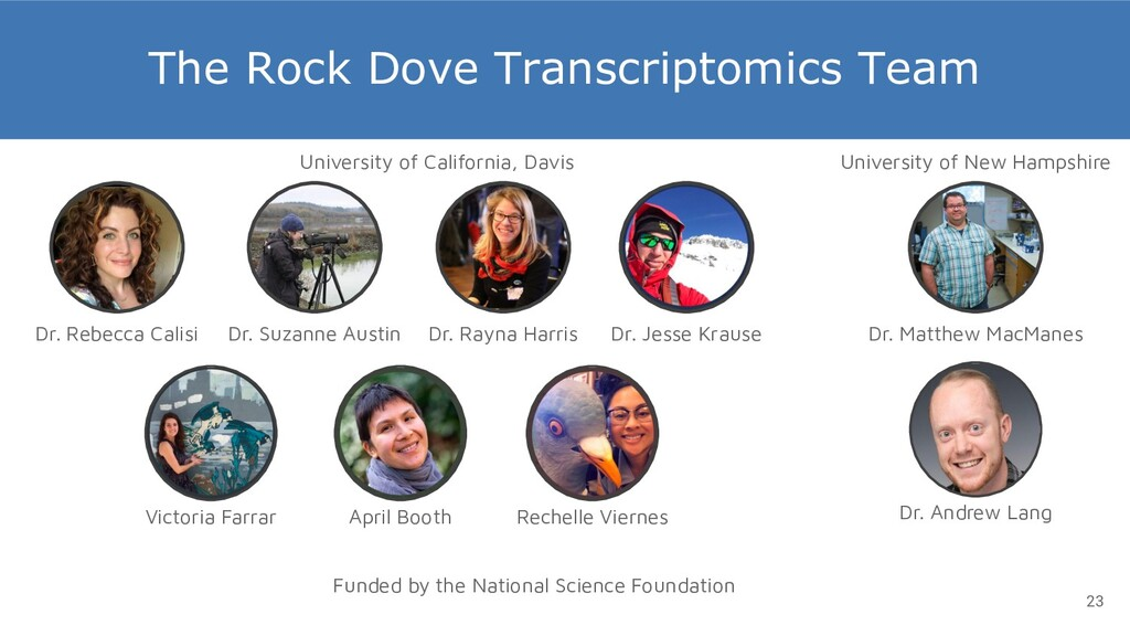The Rock Dove Transcriptomics Team Dr. Rayna Ha...