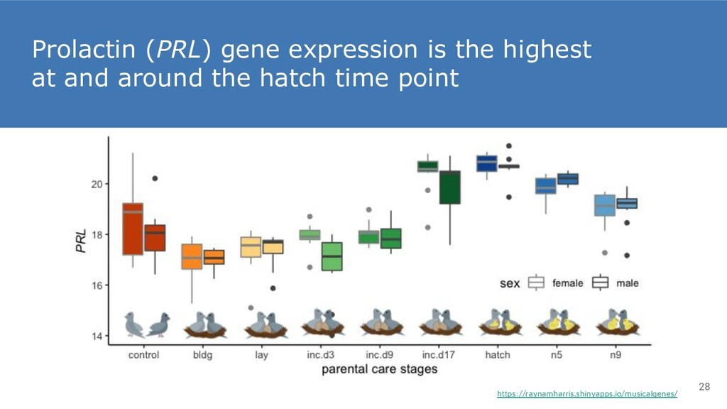 Prolactin (PRL) gene expression is the highest ...