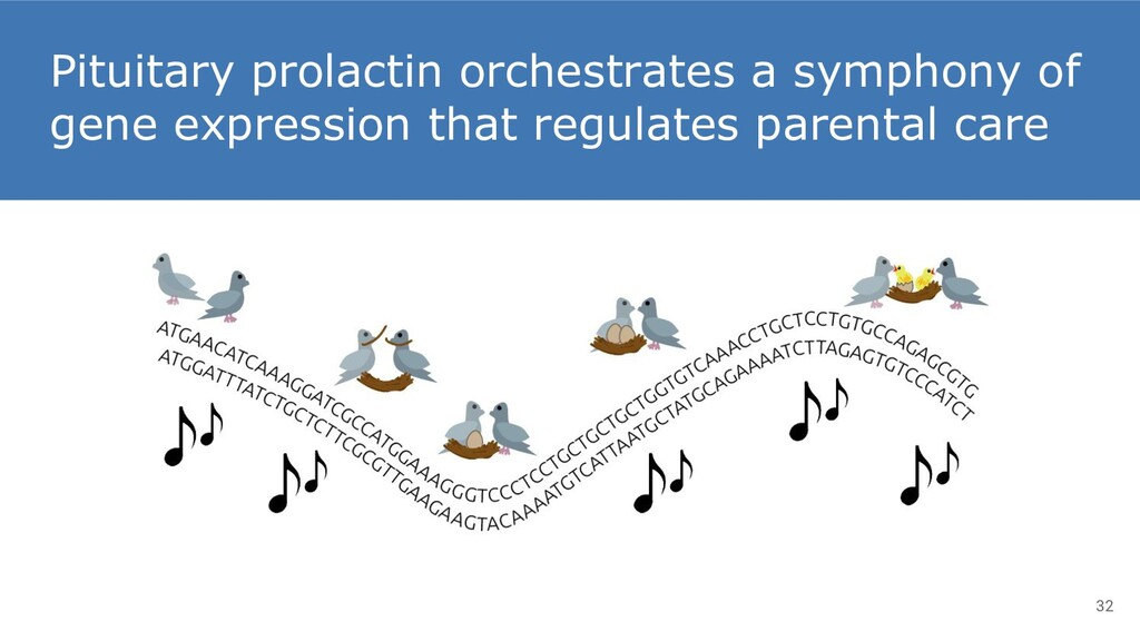 Pituitary prolactin orchestrates a symphony of ...